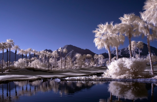 Palm Springs IR