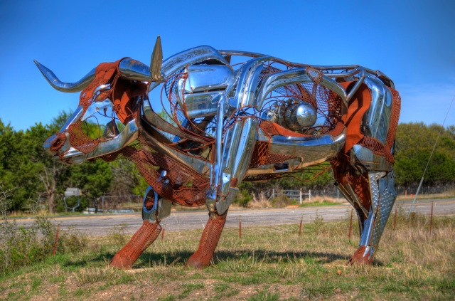 Texas Longhorn HDR