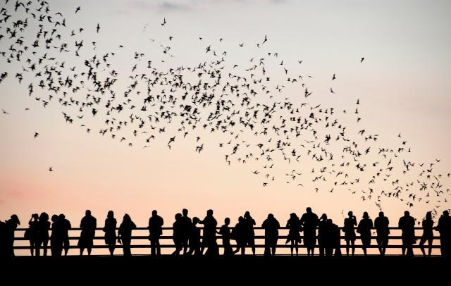 Austin Bats 1