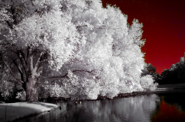 Munich Olympic Park - IR