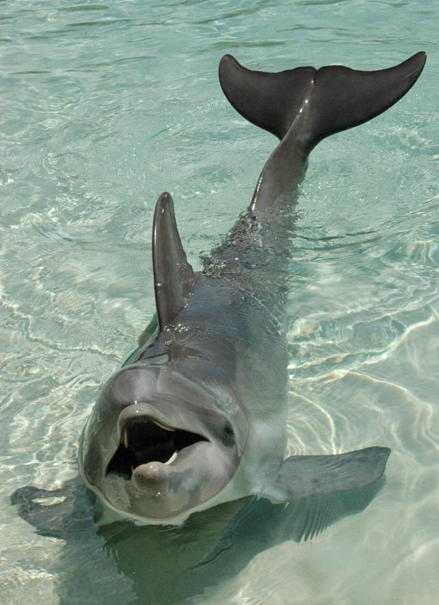 Orlando, FL - Dolphin Discovery Cove