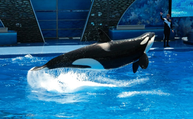 Sea World - Shamu