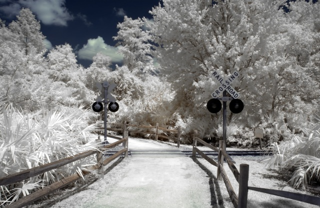 Gatorland Train Tracks IR