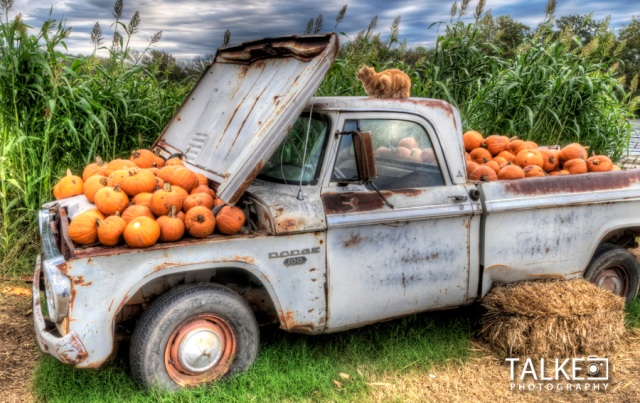 Pumkin Patch HDR