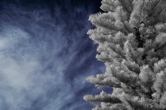 Backyard Tree IR