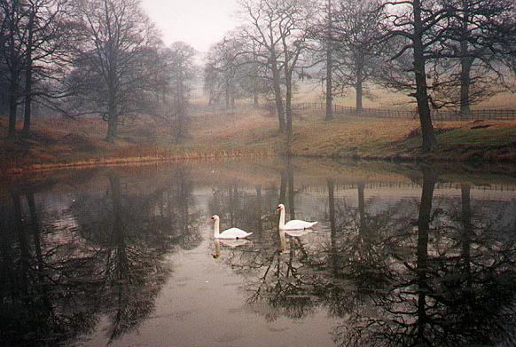 Swan Pic 1991_Talke
