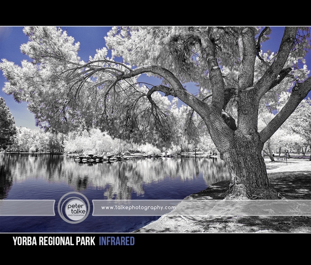Yorba Regional Park IR_Talke