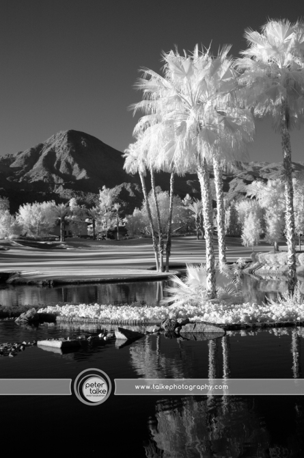 Palm Springs IR_Talke